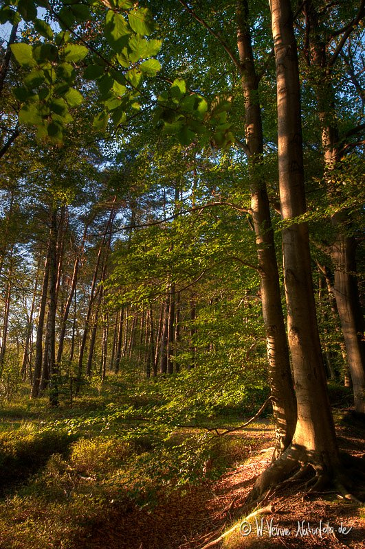 Holter Wald